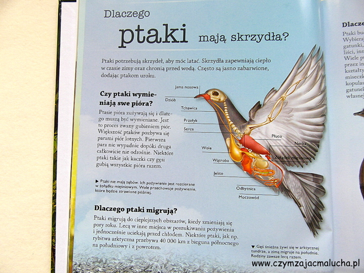 SAM_4800-ciekawostki o ptakach