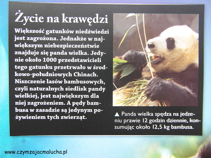 SAM_4797-ciekawowstki o pandach